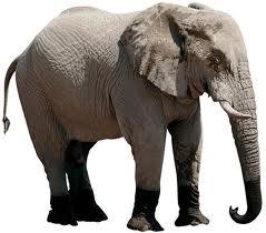 O mistério do elefante