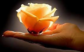 Mulher - Uma flor nas mãos do Criador