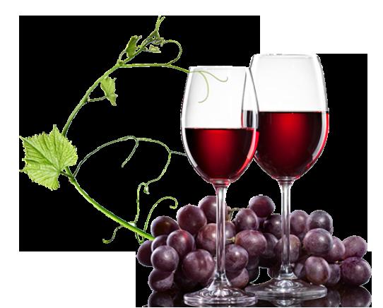 Das vinhas aos vinhos - Por Faustino Vicente