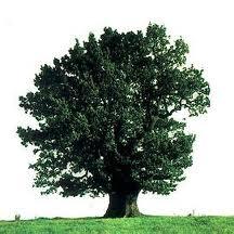 A árvore bem aventurada