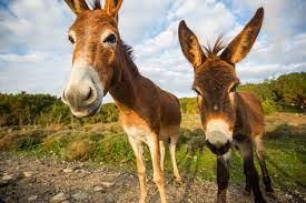 Mercado de ações ... e seus burros
