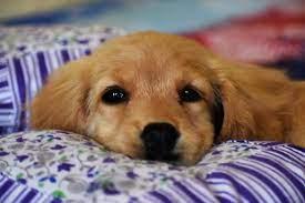 Os cães são o nosso elo com o paraíso
