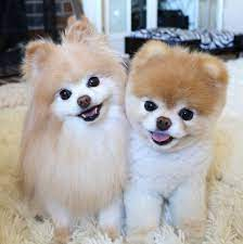 O melhor amigo do cão: O dono!
