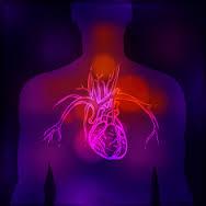 Coração encolhe, muda de forma e fica mais lento depois dos 45 anos