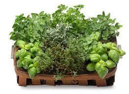 Ervas dão toque especial aos alimentos