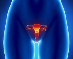 Derrubando os mitos sobre a fertilidade feminina