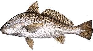 Peixe: sinônimo de saúde