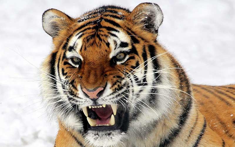 Paraguai, o Tigre Guarani
