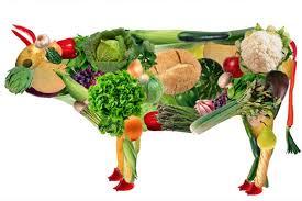 Ser ou não ser Vegan?